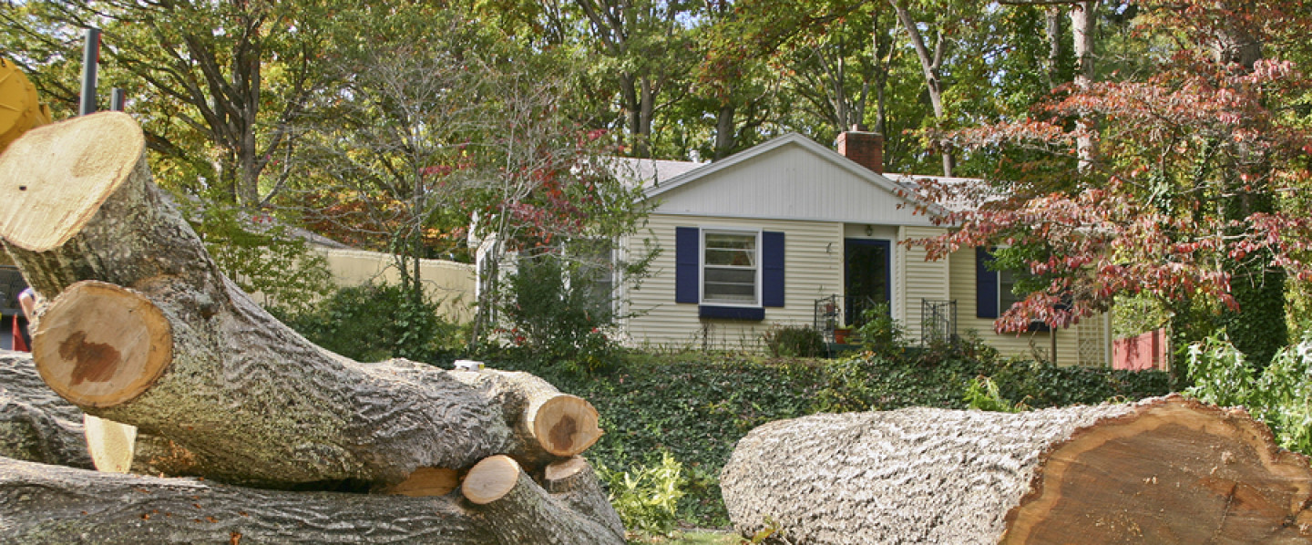 Residential Tree Removal & Stump Grinding Services in the Madison & Utica, NY area